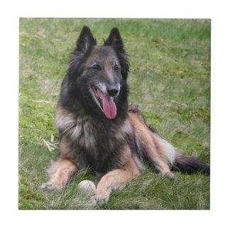 Tervuren Belgian Shepherd dog tile or trivet