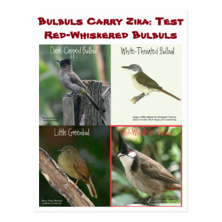 Test Red-Whiskered Bulbuls by RoseWrites Postcard