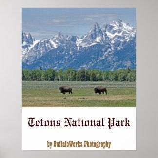 Teton Buffalo Poster