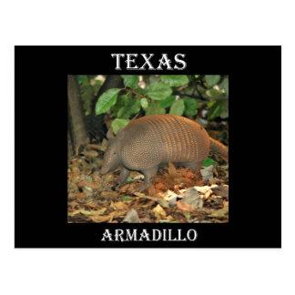 Texas Armadillo Post Card