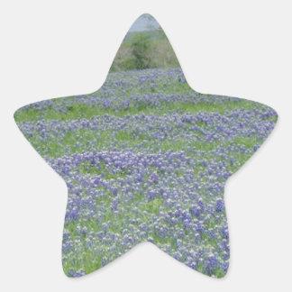 Texas Blue Bonnets Star Sticker