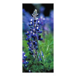 Texas Bluebonnet Custom Rack Cards