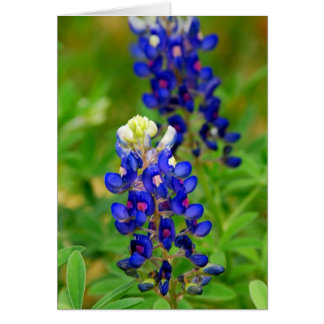 Texas Bluebonnet Note Card