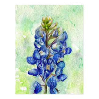 Texas Bluebonnet Wildflower Drawing Postcard