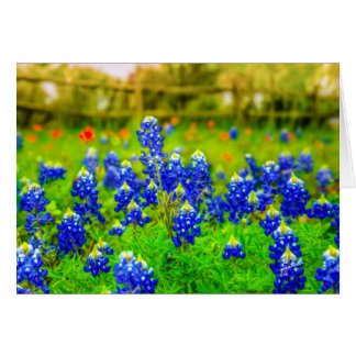 Texas Bluebonnets Card
