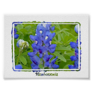 Texas Bluebonnets Digital Watercolor Poster
