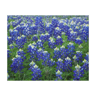 Texas Bluebonnets Field 2 Stretched Canvas Print