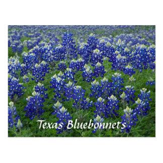 Texas Bluebonnets Field Photo Postcard