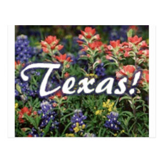 Texas Bluebonnets Paintbrushes Postcard