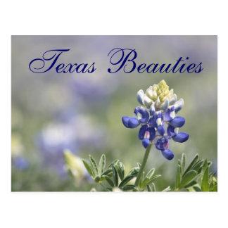 Texas Bluebonnets Photograph Series #10 Postcard