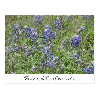 Texas Bluebonnets Postcard