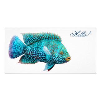 Texas Cichlid Fish Photo Card