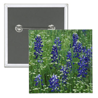 Texas, Lake Buchanan. Texas Bluebonnet and Wild 2 Inch Square Button