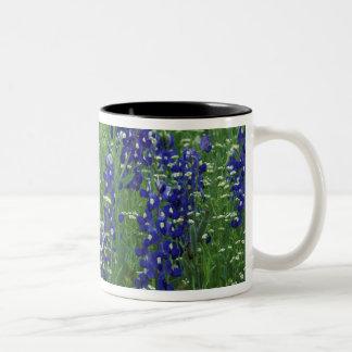 Texas, Lake Buchanan. Texas Bluebonnet and Wild Two-Tone Coffee Mug