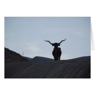 Texas Longhorn Card