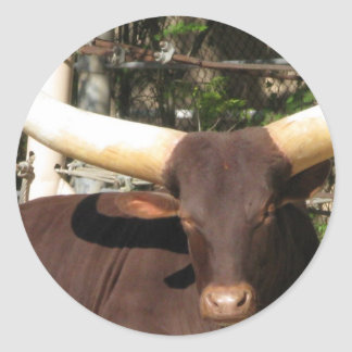 Texas Longhorn cattle Classic Round Sticker