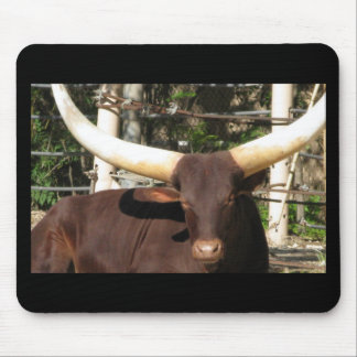 Texas Longhorn cattle Mouse Pad