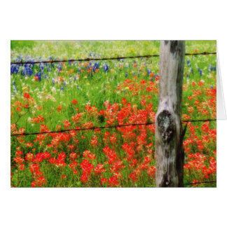 Texas Paintbrush behind Barbed WIre Fence Card
