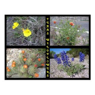 Texas Roadside Wildflowers Postcard