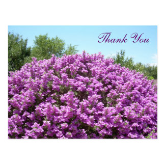 Texas Sage Thank You Postcard