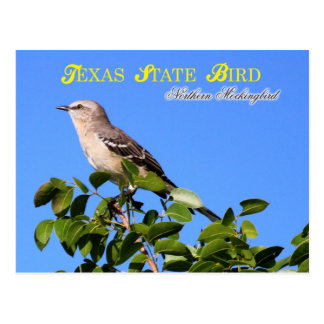Texas State Bird - Northern Mockingbird Postcard