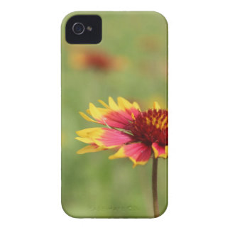 Texas Wildflowers - Indian Blanket Flower iPhone 4 Case-Mate Case