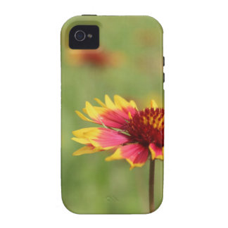Texas Wildflowers - Indian Blanket flower iPhone 4 Cover