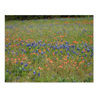 Texas Wildflowers Postcard