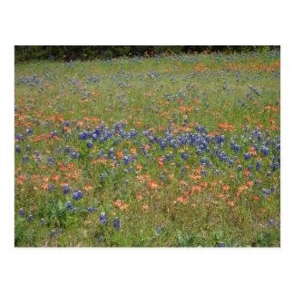 Texas Wildflowers Post Card