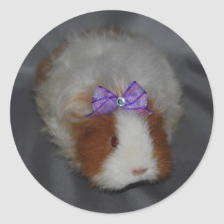 Texel Guinea Pig with bow Round Sticker