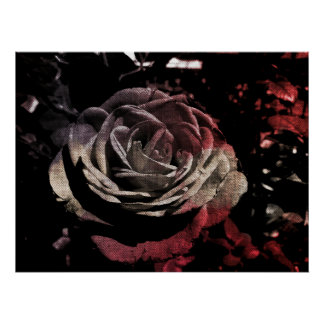 Textured Beige And Red Rose Poster