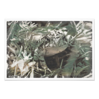 """Textured Photography """"Toad in the Grass"""" Photo Print"""
