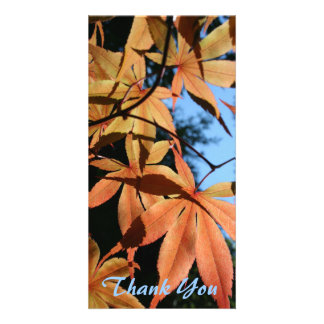 Thank You (3) - Japanese maple (2) - Picture Card
