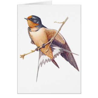 Thank You - Barn Swallow Card