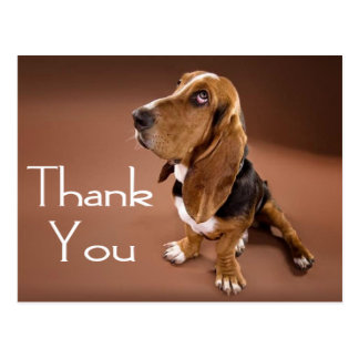 Thank You Basset Hound Greeting Post Card