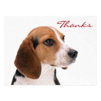 Thank You Beagle Puppy Dog Greeting Postcard