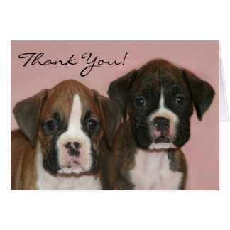 Thank you Boxer Puppies greeting card