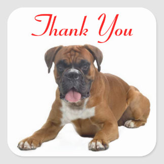Thank You Boxer Puppy Dog Greeting Sticker