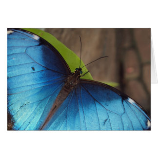 Thank you Card, Blue Morpho Card