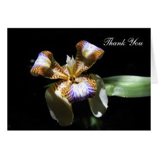 Thank You Card - Iris Flower on Black Background
