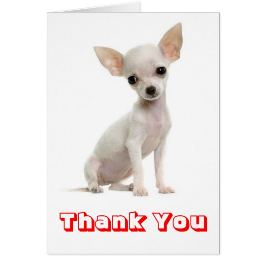 Thank You Chihuahua Puppy Dog Greeting Card
