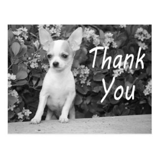 Thank You Chihuahua Puppy Dog Postcard