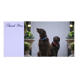 Thank You, Chocolate Labs Personalized Photo Card