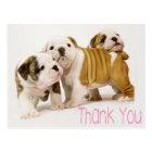 Thank You English Bulldog Puppy Dogs Postcard
