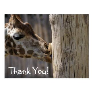 Thank You Giraffe Kisses Postcard