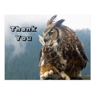 Thank You Great horned owl Postcard