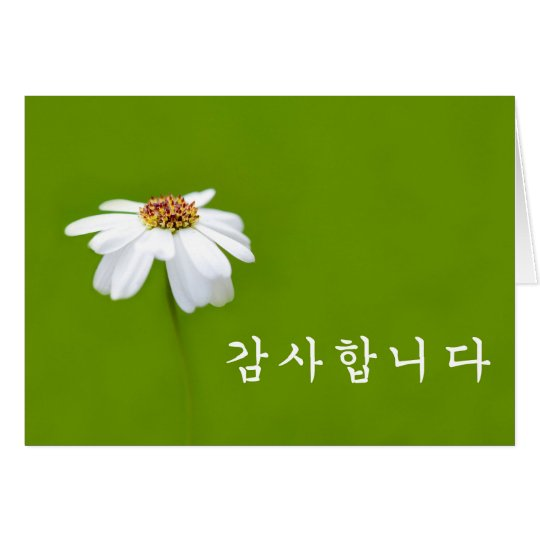 Thank you in Korean - white daisy Card