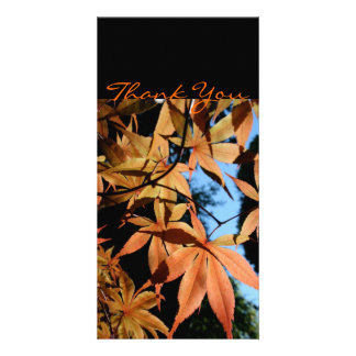 Thank you - Japanese maple - Card
