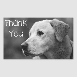 Thank You  Labrador Retriever Puppy Dog Sticker