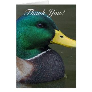 Thank you Mallard Duck Greeting Card